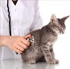 Ветеринарные клиники в Нелидово